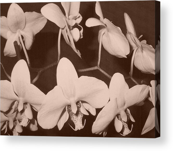 Flowers Acrylic Print featuring the photograph Orchids In Sepia by Lila Mattison