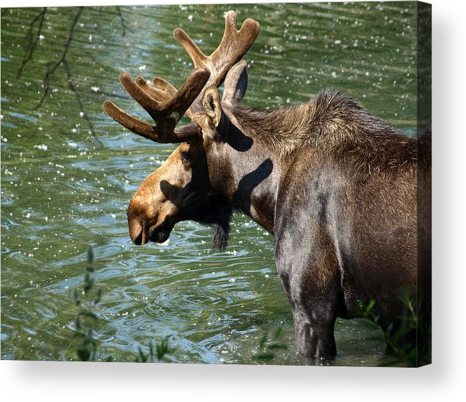 Wildlife Acrylic Print featuring the photograph Out For Lunch by DeeLon Merritt