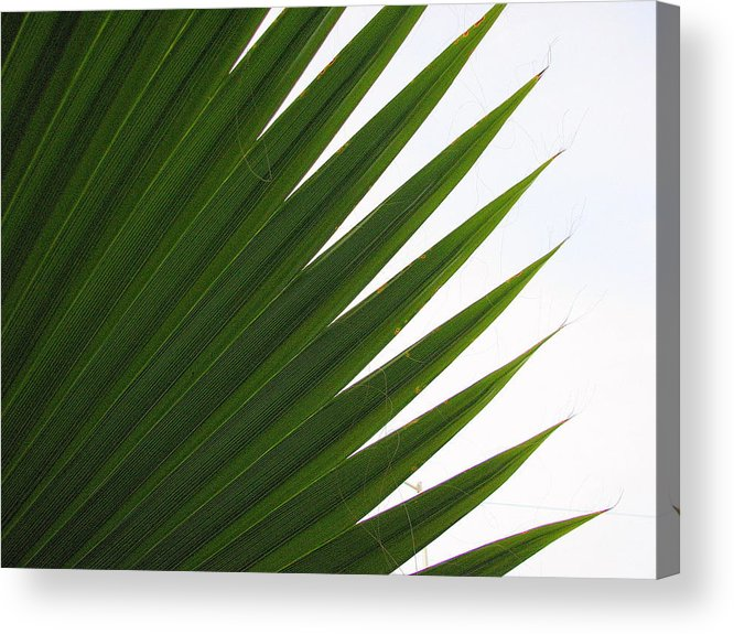 Palm Acrylic Print featuring the photograph Palm by Kathy Roncarati