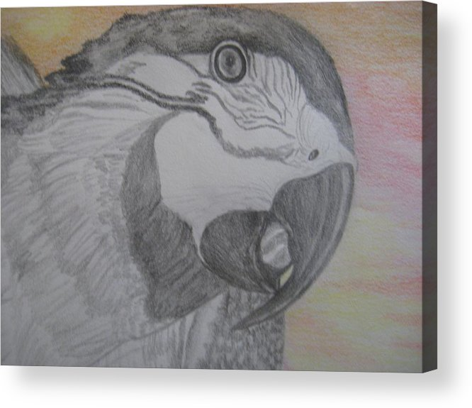 Parrot Acrylic Print featuring the drawing Parrot by Theodora Dimitrijevic
