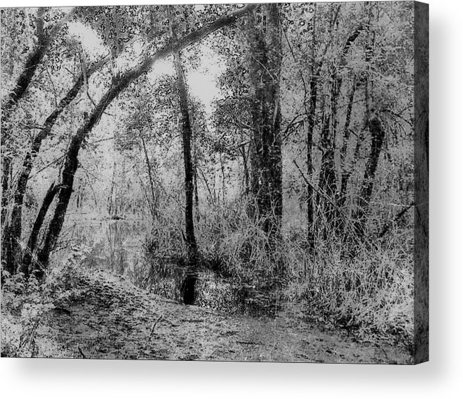 Landscape Acrylic Print featuring the photograph Peaceful Trees by Yaya UrsRich Ursula Richards