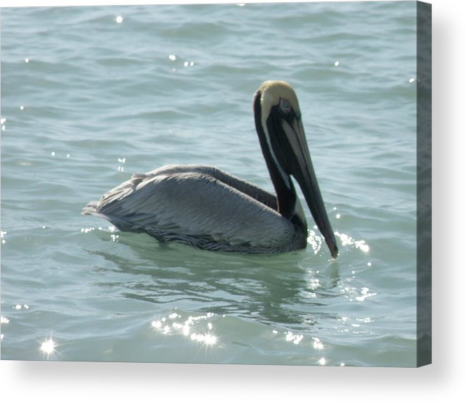 Pelican Acrylic Print featuring the photograph Pelican In The Sparkling Water by Mary Hurst