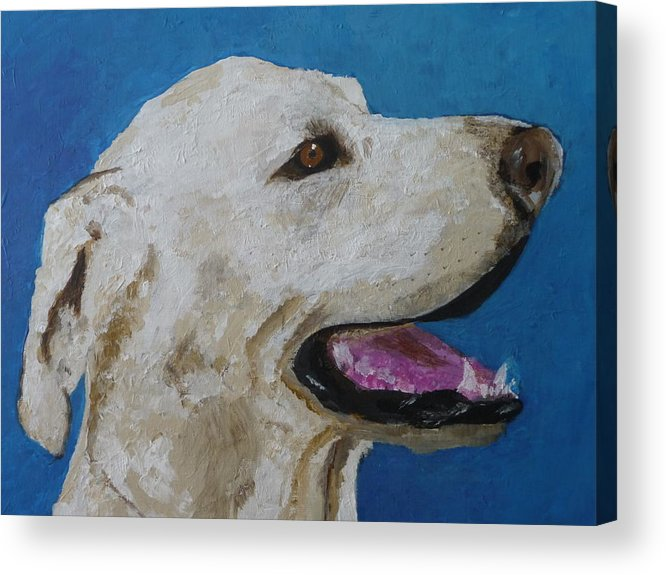 White Lab Acrylic Print featuring the painting Pet Portrait Of Smiley Riley by Laura Dinoia