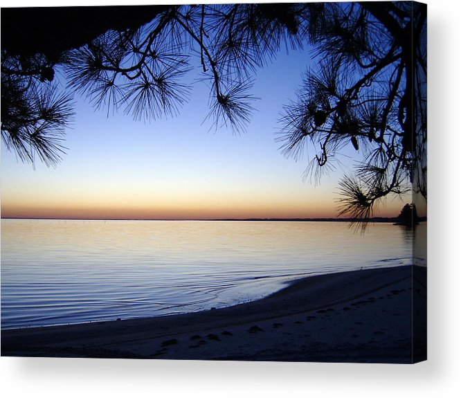 Tree Acrylic Print featuring the photograph Piney Sunset by Larry Underwood