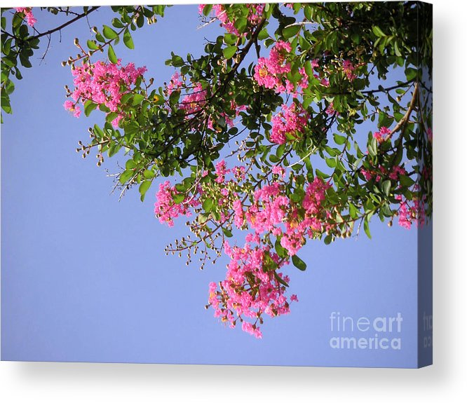 Nature Acrylic Print featuring the photograph Pink And Blue Canopy by Lucyna A M Green