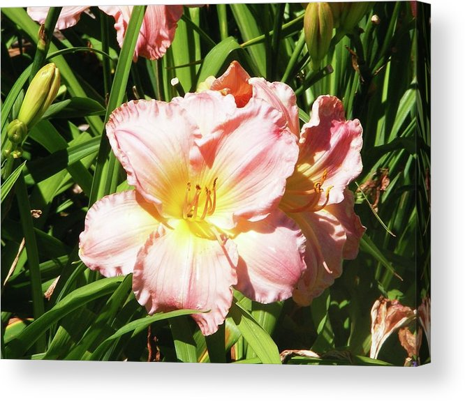 Green Acrylic Print featuring the photograph Pink Flower by Michelle Hoffmann