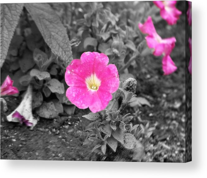 Flowers Acrylic Print featuring the photograph Pink by Jessica Burgett