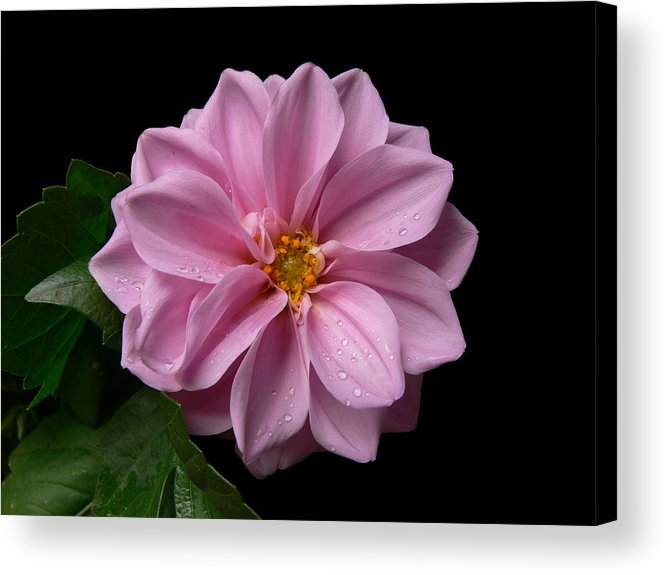 Pink Acrylic Print featuring the photograph Pinkie by Doug Norkum