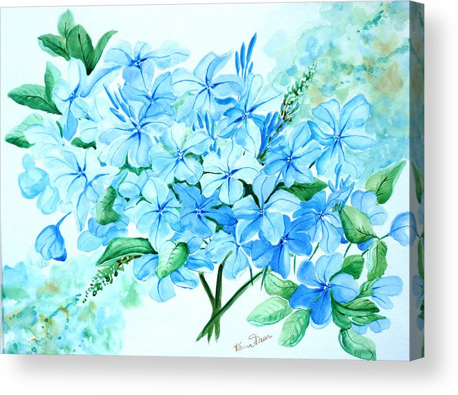 Floral Blue Painting Plumbago Painting Flower Painting Botanical Painting Bloom Blue Painting Acrylic Print featuring the painting Plumbago by Karin Dawn Kelshall- Best