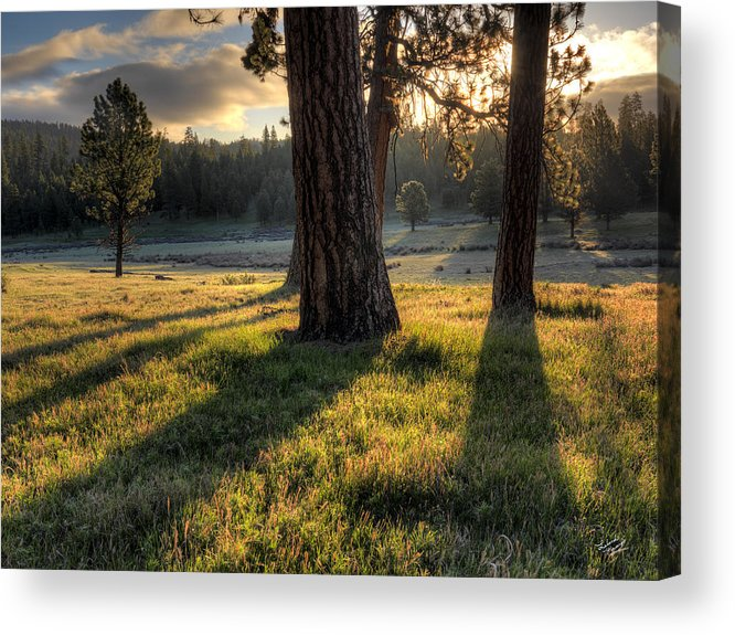 Beautiful Acrylic Print featuring the photograph Ponderosa Pine Meadow by Leland D Howard