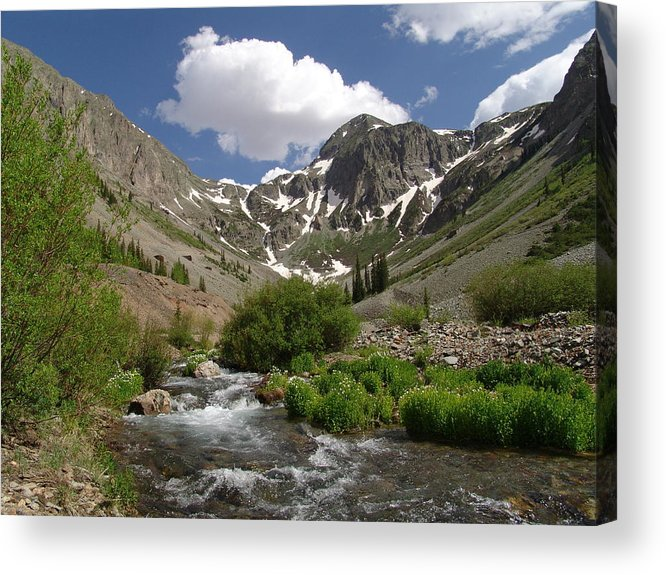 Trees Acrylic Print featuring the photograph Pure Mountain Beauty by Carol Milisen