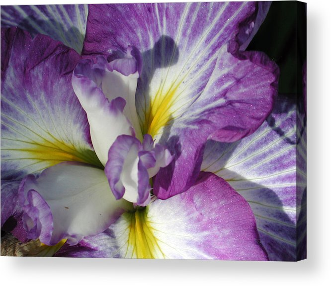 Flower Acrylic Print featuring the photograph Purple Flower 2 by Holly Wolfe