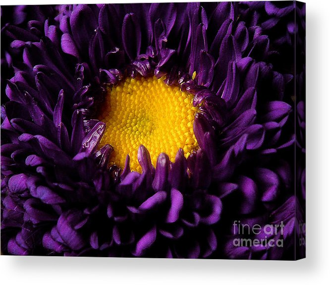 Nature Acrylic Print featuring the photograph Purples - Zooming To The Center by Lucyna A M Green