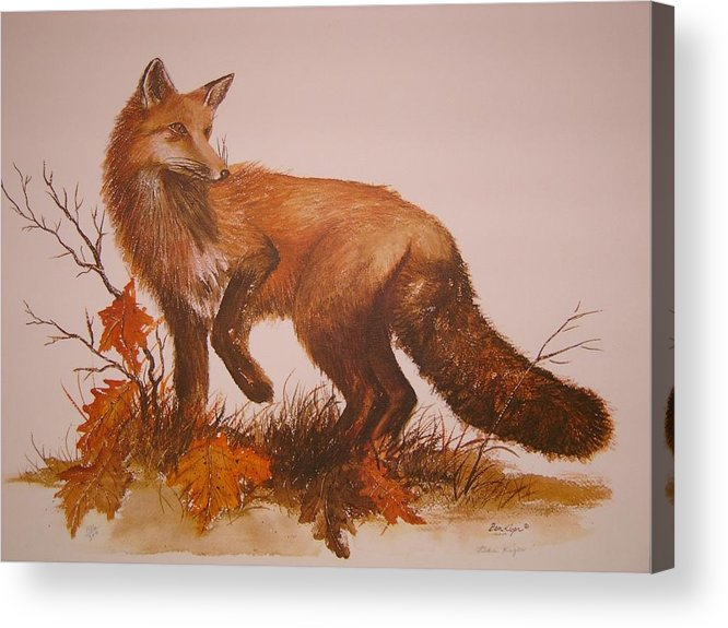 Nature Acrylic Print featuring the painting Red Fox by Ben Kiger