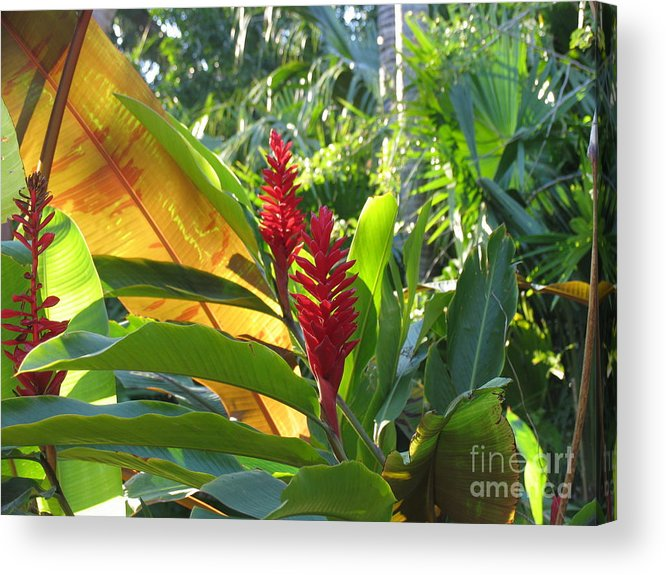 Red Acrylic Print featuring the photograph Red Ginger by Stephanie Richards