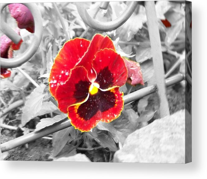Flowers Acrylic Print featuring the photograph Red by Jessica Burgett