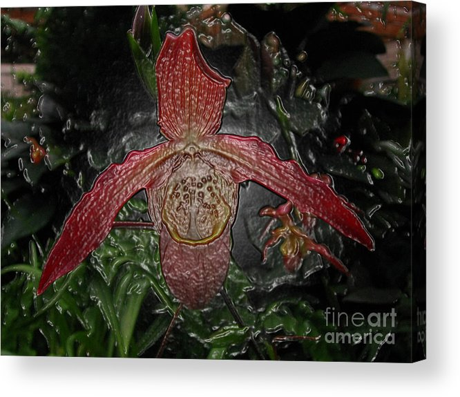 Orchid Acrylic Print featuring the digital art Red Lady Slipper by Donna Brown