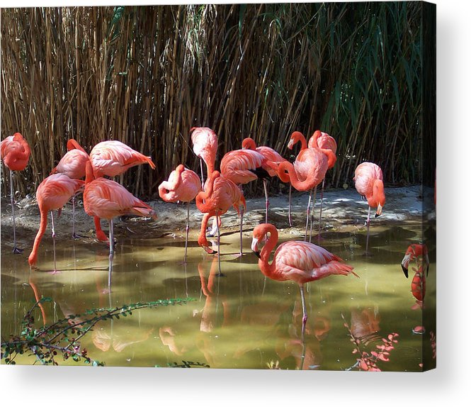 Nature Acrylic Print featuring the photograph Reflections by Claude Marshall