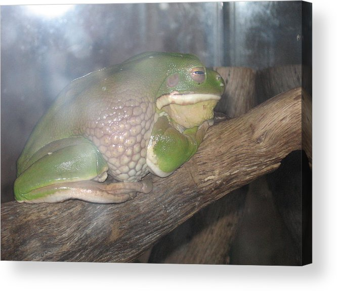 Frog. Tree Frog Acrylic Print featuring the photograph Relaxation by Sandra Winiasz