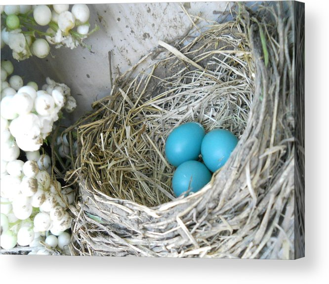 Nature Acrylic Print featuring the photograph Robin Eggs In A Wreath by Marqueta Graham