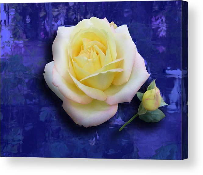 Rose Acrylic Print featuring the photograph Rose On Blue by Morgan Rex