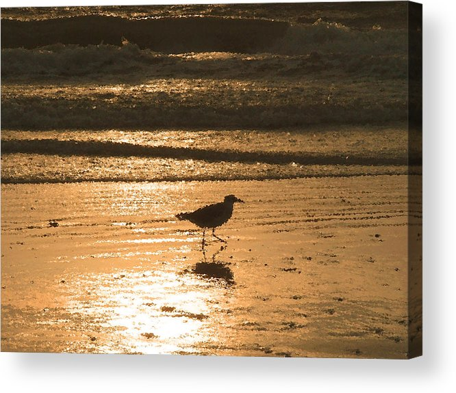 Nature Acrylic Print featuring the photograph Sandpiper by Peg Urban