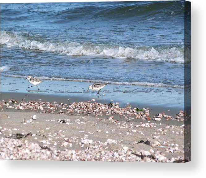 Sandpiper Acrylic Print featuring the photograph Sandpipers At The Seashore by Margie Avellino