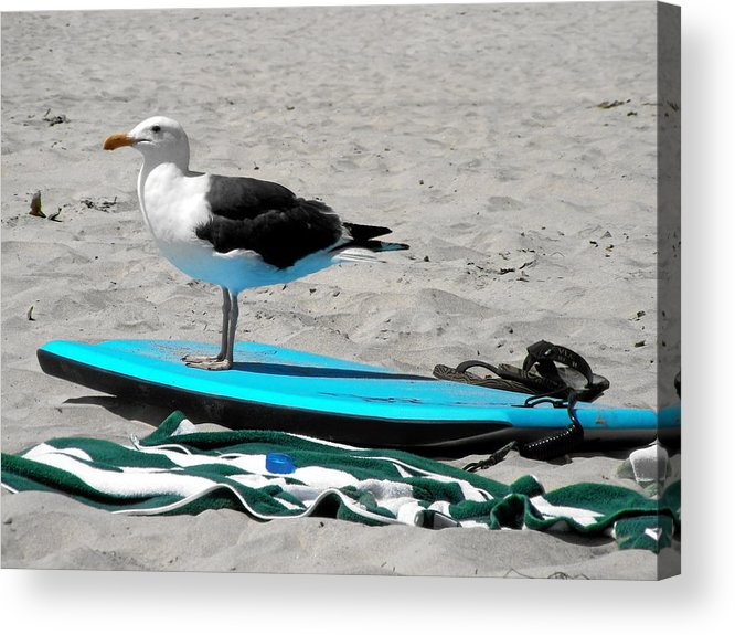 Bird Acrylic Print featuring the photograph Seagull On A Surfboard by Christine Till