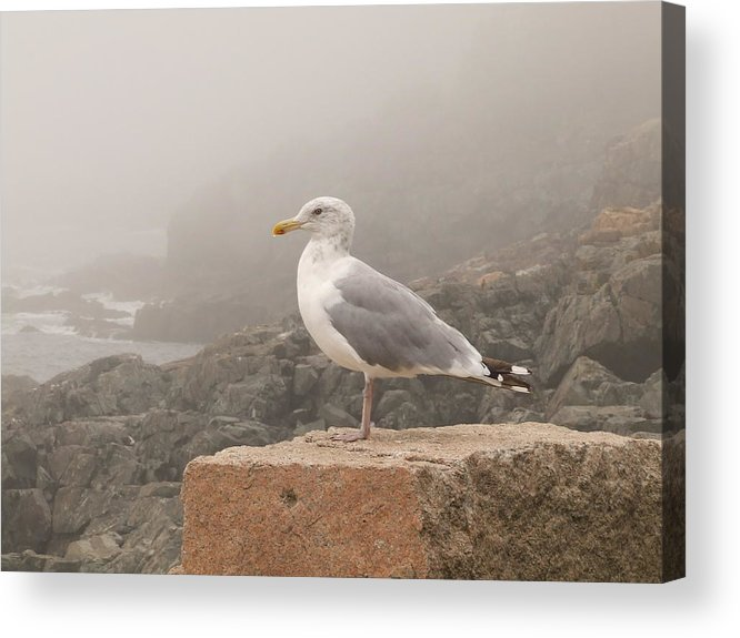 Maine Acrylic Print featuring the photograph Sentinel by William Moore