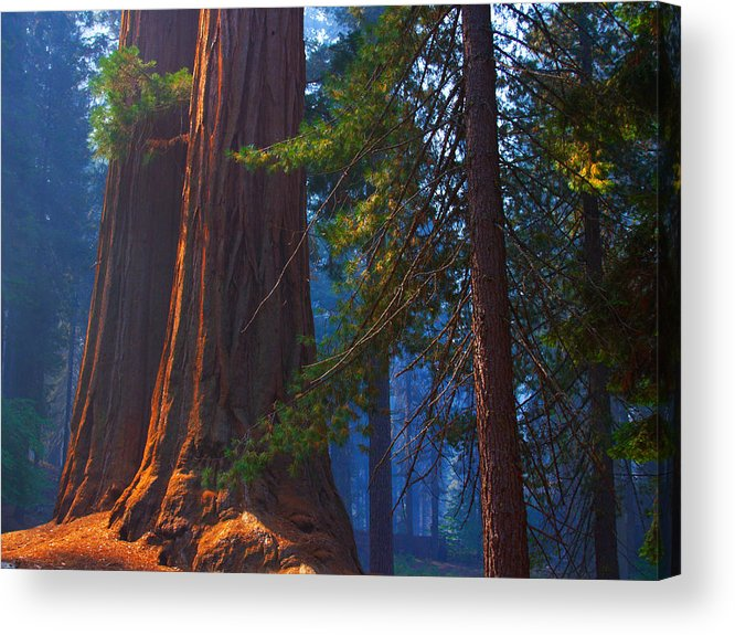 Sequoias Acrylic Print featuring the photograph Sequoias On Blue by Kenneth Sponsler