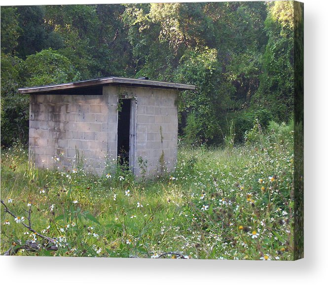 Nature Acrylic Print featuring the photograph Shed The Old by Stephanie Richards