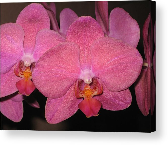 Orchid Acrylic Print featuring the photograph Shimmer by Betnoy Smith