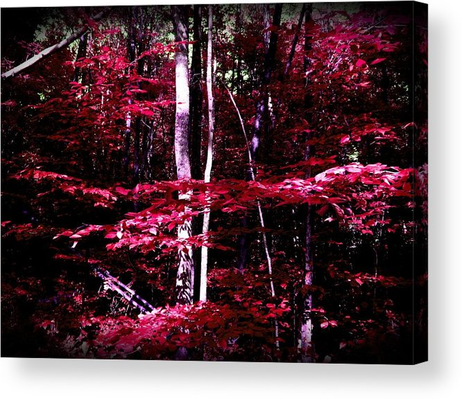 Woods Acrylic Print featuring the photograph Simply Content by Lacy Fizer