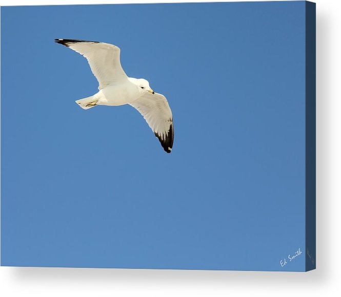 Smooth As Silk Acrylic Print featuring the photograph Smooth As Silk by Ed Smith