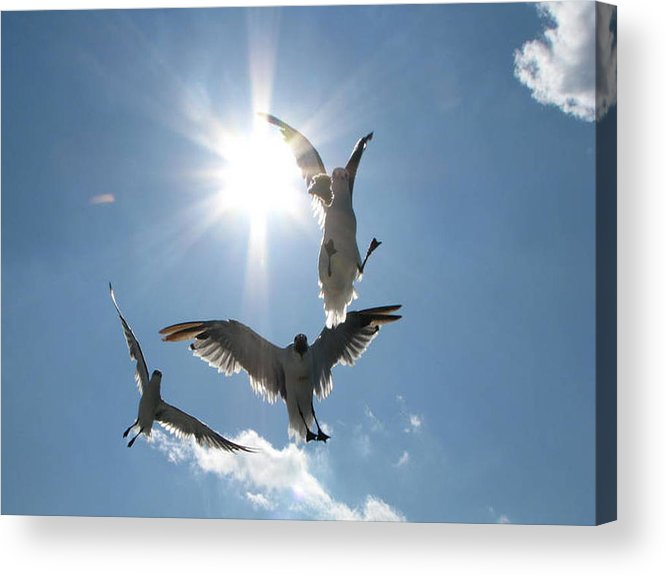 Sea Acrylic Print featuring the photograph Smooth Landing by Dottie Dees