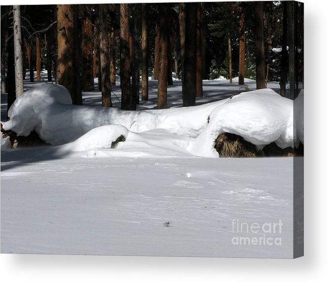 Snow Acrylic Print featuring the photograph Snowy Log by PJ Cloud