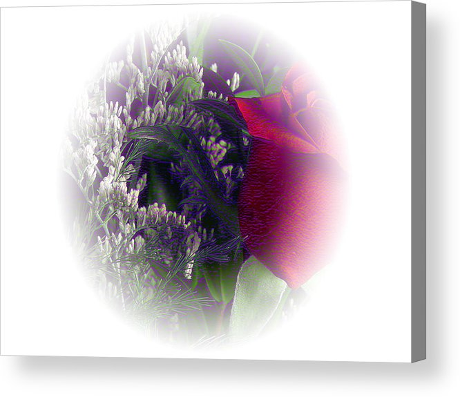 Rose Acrylic Print featuring the photograph Soft Light Rose by Evelyn Patrick