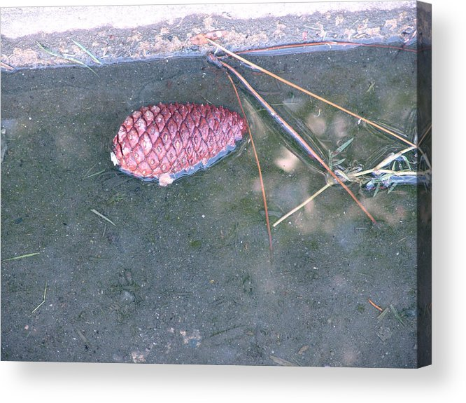 Dewey Beach Acrylic Print featuring the photograph Sorrow Floats by Kevin Callahan