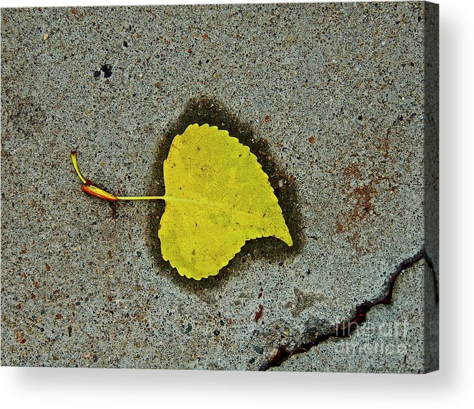 Leaf Acrylic Print featuring the photograph Spared Heart And Its All Yellow by Heidi Peschel
