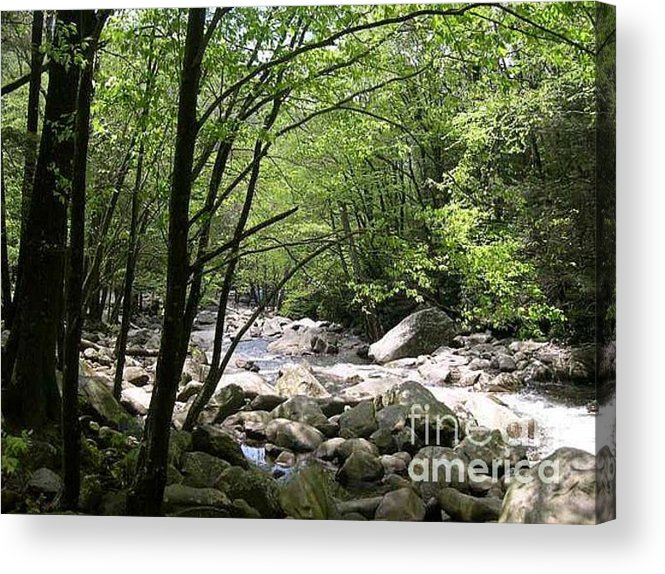 Nature Acrylic Print featuring the photograph Springtime In The Smoky Mountains by Barb Montanye Meseroll