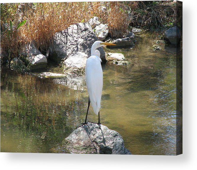Loon Acrylic Print featuring the photograph Standing Alone 2 by Kathy Roncarati