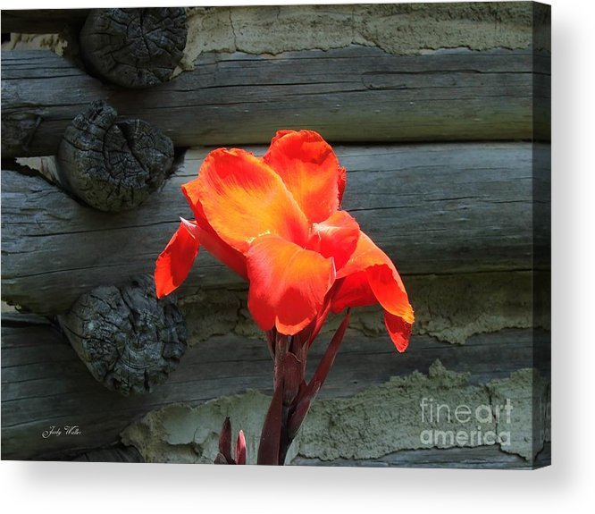 Logs Acrylic Print featuring the photograph Standing Tall by Judy Waller