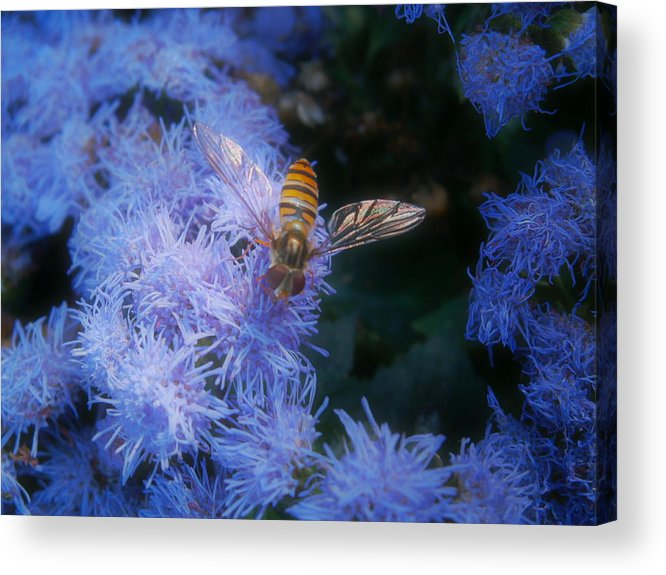 Stripes Acrylic Print featuring the photograph Stripes And Blues by Andy Davis