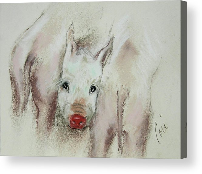Animal Acrylic Print featuring the drawing Stuck In The Middle by Cori Solomon