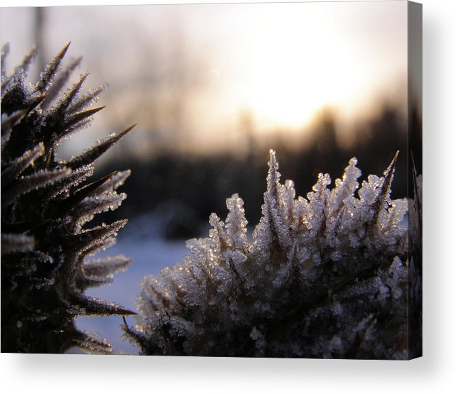 Macro Acrylic Print featuring the photograph Sugar Crystals by Scott Hovind