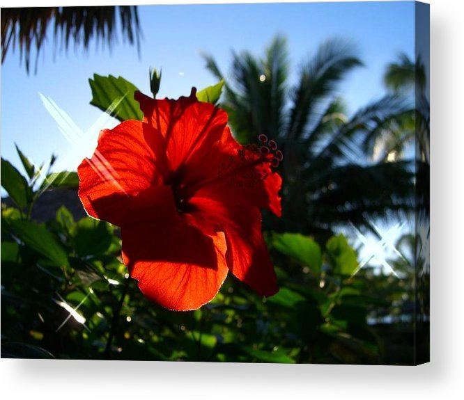 Flowers Flowers Flowers Acrylic Print featuring the photograph Sun And Flowers by Jonathan Galente