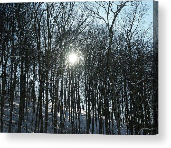 Sun Acrylic Print featuring the photograph Sun Through The Trees by Martie DAndrea