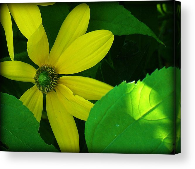 Flowers Acrylic Print featuring the photograph Sunshine by Mg Blackstock