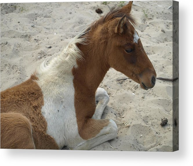 Sand Acrylic Print featuring the photograph Sweet Moment by Kim