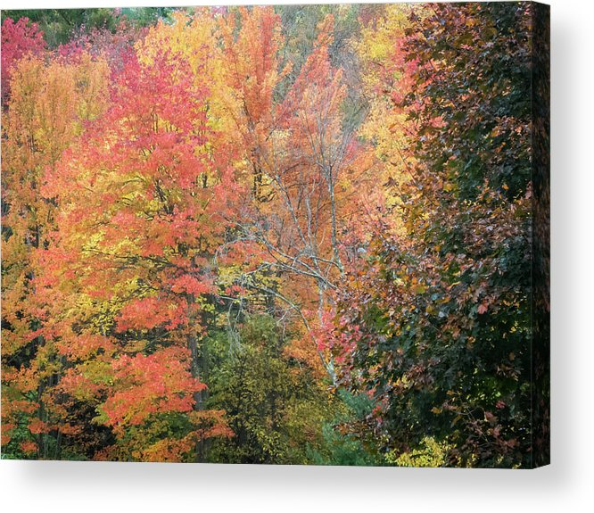 Fall Foliage Acrylic Print featuring the photograph Tall And Wide by Diane Moore